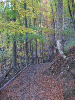 Trail on Mt. Olympus