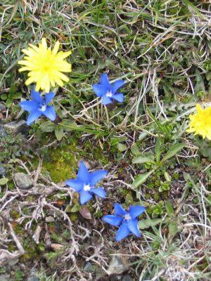 Spring flowers in Zagori